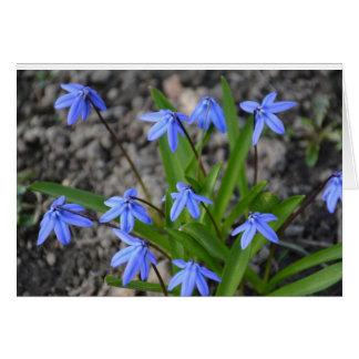 Blank Note Card Spring Flowers