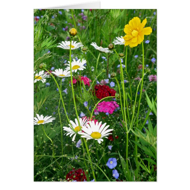Blank Note Card: Spring Wildflowers