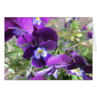 Blank Note Card--Violets Card