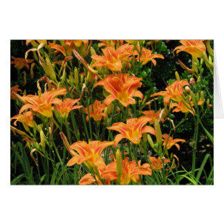 Blank Orange Flowers Card