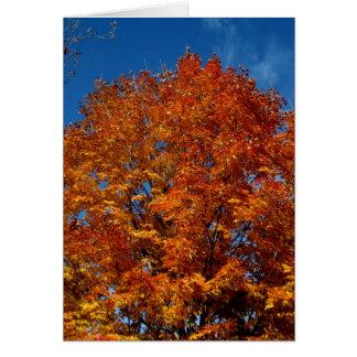 Blank_Orange Tree Top Fire Greeting Cards