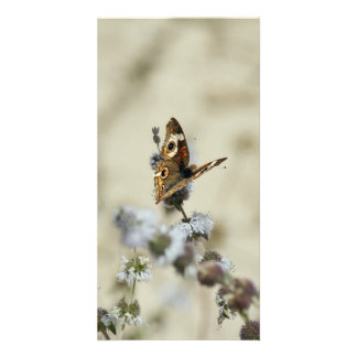 Blank Photo Card, Butterfly Card