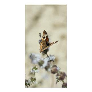 Blank Photo Card, Butterfly