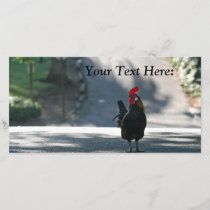 Blank Photo Card, Rooster