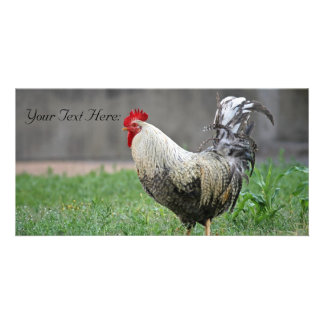 Blank Photo Card Rooster