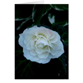 Blank-Pure White Flower Card