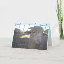 Blank Sheep note cards