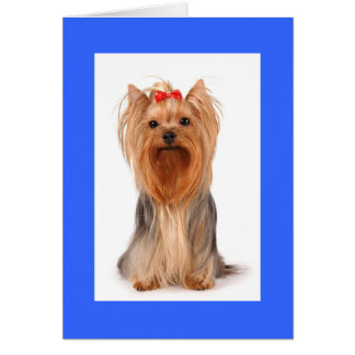 Blank Yorkshire Terrier Puppy Dog Notecard Cards