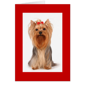 Blank Yorkshire Terrier Puppy Dog Notecard Greeting Cards