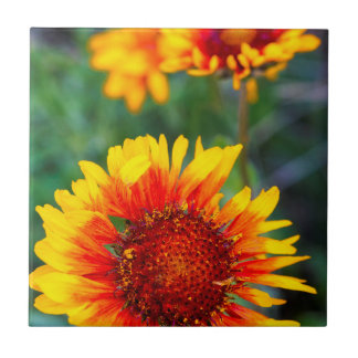 Blanket flower aka brown eyed susan in Glacier Ceramic Tile