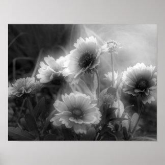 Blanket Flower Black White Photo Print
