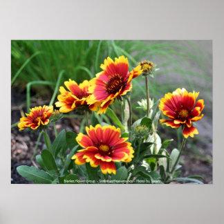 Blanket Flower Group Flower Photography Print