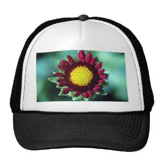 Blanket flower trucker hats