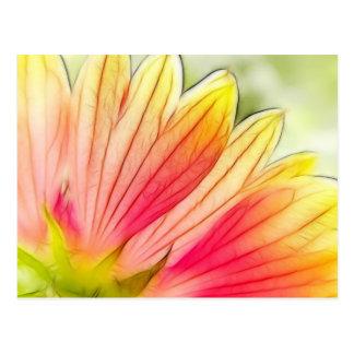 Blanket Flower Petals Close Up Post Cards