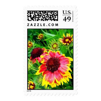 Blanket Flower Postage Stamp