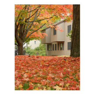 Blanket of Fallen Leaves Postcard