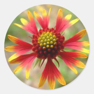 Blanketflower desert wildflower Gaillardia Classic Round Sticker