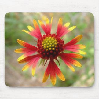 Blanketflower desert wildflower Gaillardia Mouse Pad