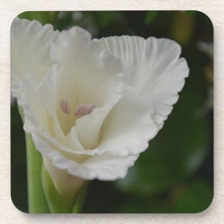 blanquea belleza posavaso