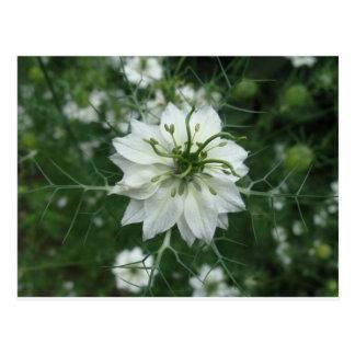 Blanquea flor