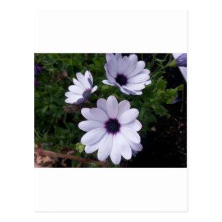 Blanquea macro flor