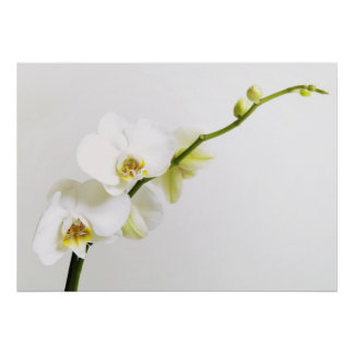 Blanquea orquídeas póster