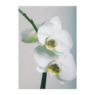 Blanquea orquídeas representación de lienzo