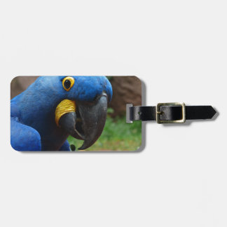 blauaras parrot luggage tag