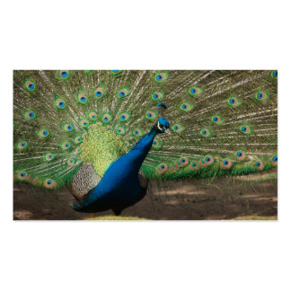 Blauer Pfau Taschenkalender 2011 Business Card