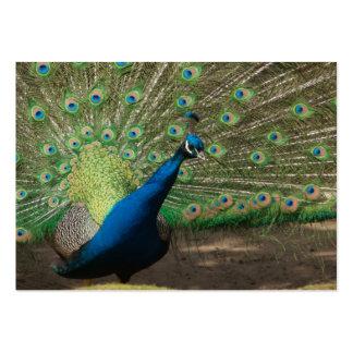Blauer Pfau Taschenkalender 2011 Business Card Templates