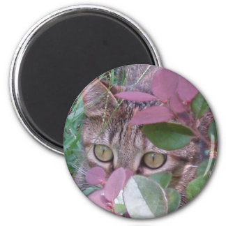 Blaze Cat Eyes Magnet