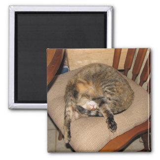 Blaze Cat Nap Refrigerator Magnet