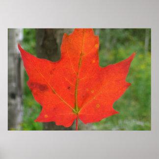 Blaze Maple Poster