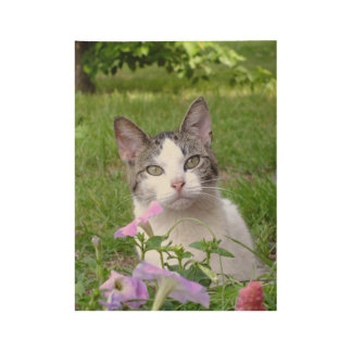 Blaze The Cat And The Petunias Wood Poster