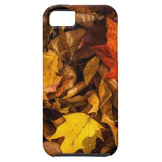 Blazing Autumn Leaves iPhone SE/5/5s Case