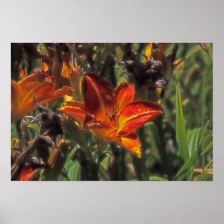 Blazing Lily  Print