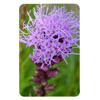 Blazing Star Flower Magnet