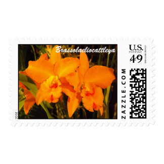 BLC Postage Stamps
