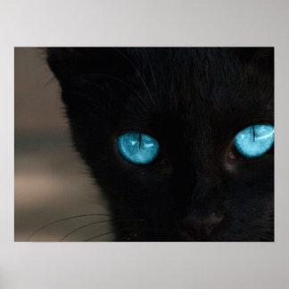 BLCBE Black Cat Blue Eyes Poster