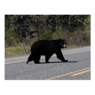 BLCR Bear Crossing Postcard