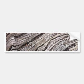 Bleached Australian hardwood of fallen gum tree Bumper Sticker