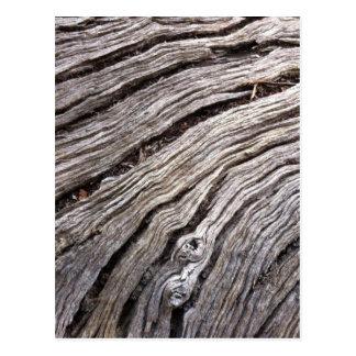 Bleached Australian hardwood of fallen gum tree Postcard