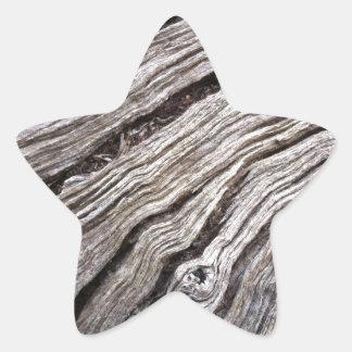 Bleached Australian hardwood of fallen gum tree Star Sticker