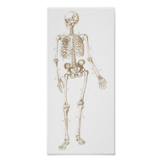Bleached Skeleton Poster