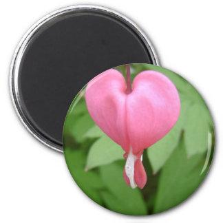 Bleeding Heart Blossom Magnet Magnets