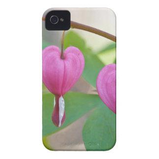 Bleeding Heart Blossoms iPhone 4 Case-Mate Case