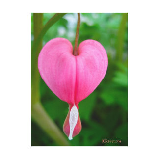 Bleeding Heart Flower Canvas Print