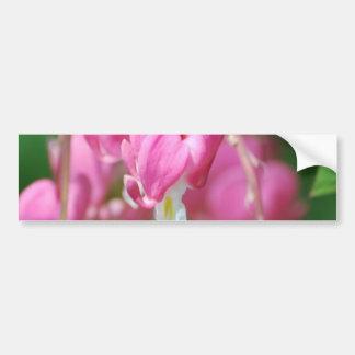 Bleeding Heart Flowers  Bumper Sticker
