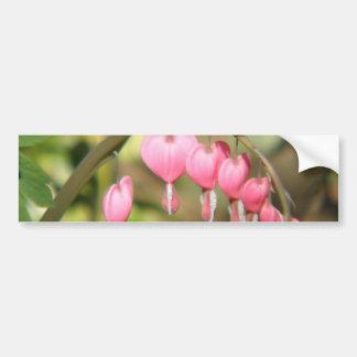 Bleeding Heart Perennials Bumper Sticker