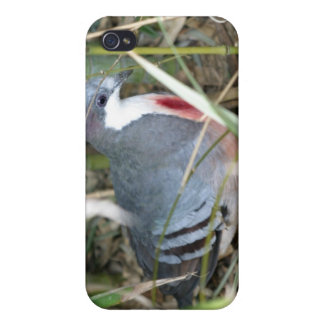 Bleeding Heart Pigeon Cases For iPhone 4